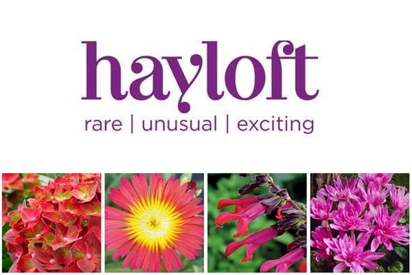hayloft plants company logo